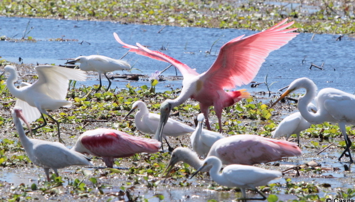Caño Negro: Ramsar Wetland of international importance